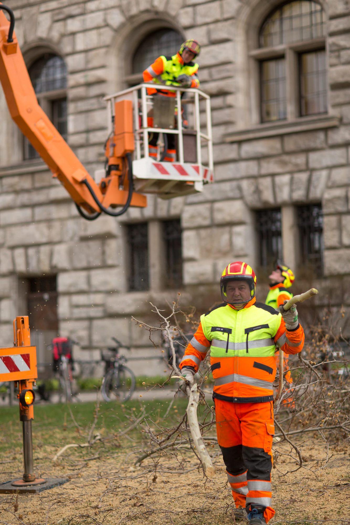 Regentaucher | Fotografie von Baumschnittarbeiten in der Innenstadt Leipzig im Auftrag der Stadtreinigung Leipzig